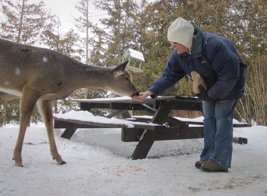 Carolyn Porter feeding corn to a large doe at Gunflint Lodge in northern Minnesota.